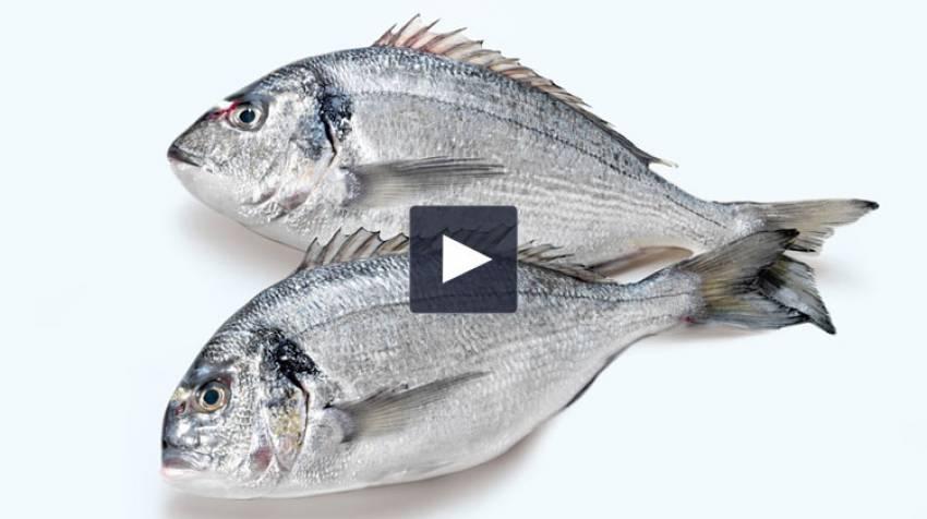 Calidad del pescado
