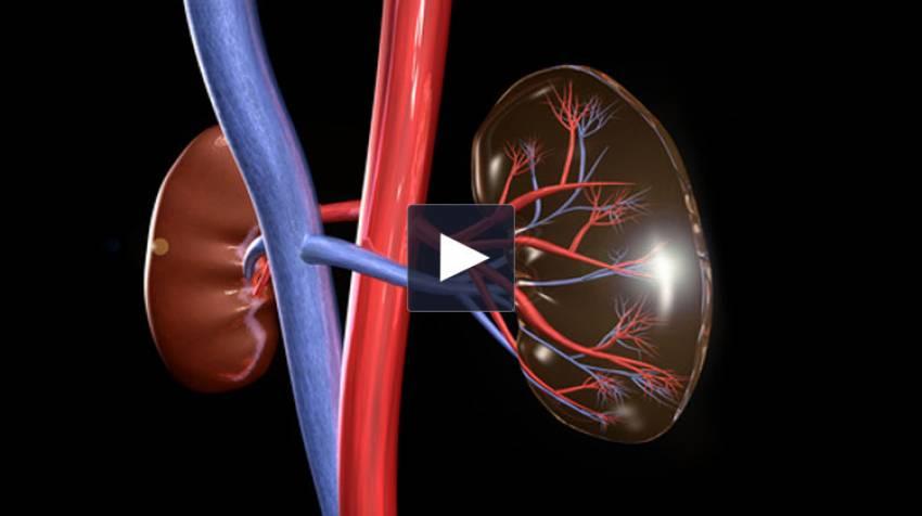 Vesícula y riñón