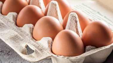 Todo sobre el huevo
