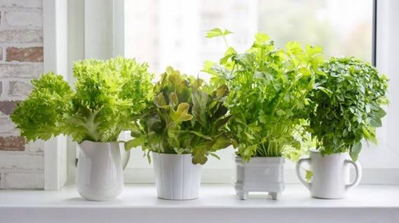 Un jardín medicinal en tu propia casa